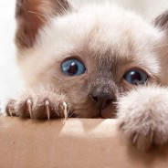 Ask the Vet: How do I Stop my Cats from Scratching the Furniture?