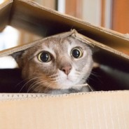 Why Do Cats Act So Weird? Here's the Science Behind Their Strangest Behaviors