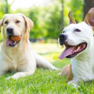Mistakes People Make at the Dog Park That Put Their Pet at Risk