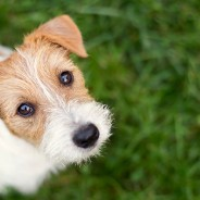 Is CBD Oil Good for Pets?