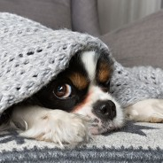 Ask the Vet: Why Do Pets Hide When They're Sick?
