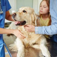 Preparing for Your Pet's First Visit to the Vet