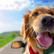Best Pet-Friendly Cities to Take a Road Trip To