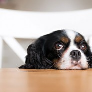 Top Human Foods Your Pet Should Stay Away From