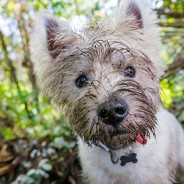 Ask the Vet: Why Do Dogs Dig Holes?