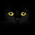 Ask the Vet: Can Cats Really See in the Dark?