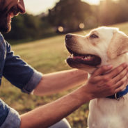 In the News: Feeling lonely? A Dog May Help!