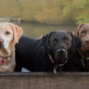 In the News: How Conservation Dogs Help Track Endangered Species
