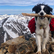 Pet Spotlight: Barley with the Working Dogs for Conservation