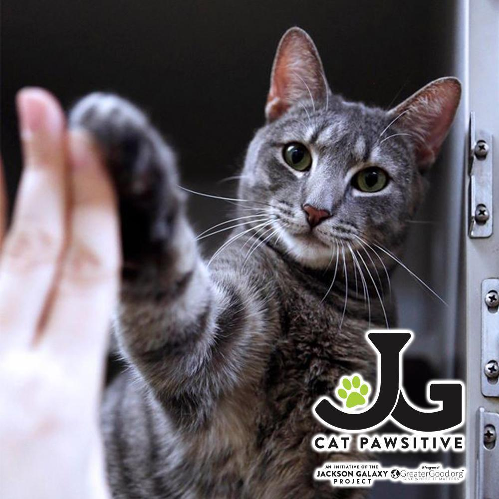 Cat Pawsitive Cat High Five